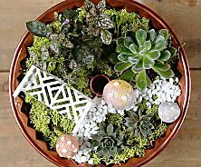Creative Terrariums: Your How-To Guide to Succulents and Moss