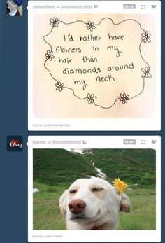 The 30 Most Perfectly Timed Tumblr Posts That dog is the happiest.