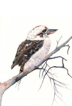 Kookaburra watercolor