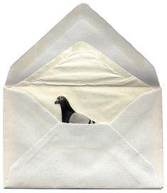 Kirjekyyhky / Homing Pigeon , Anu Tuominen