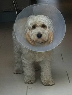 It's all fun and games until SOMEBODY has to wear the CONE!