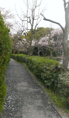 Cherry Blossoms (Osaka, Japan)  © beautyworkshop.gr