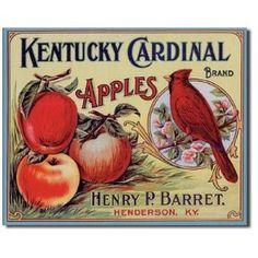 Kentucky Cardinal Apples Retro Vintage Tin Sign