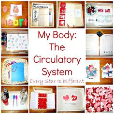 Circulatory system learning activities and free printables for kids.