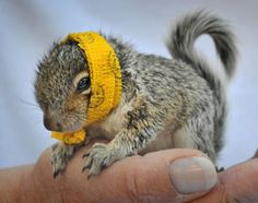 aww, me loves squirrels