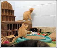 (Live) Too Cute Kitten Cam (now updated with new kittens)