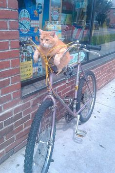 Nonchalantly riding bicycles. | 25 Things Cats Are Secretly ObsessedWith