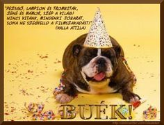 Állatbarátok – Közösség – Google+ Boston Terrier, French Bulldog, Poster, Humor, Dogs, Animals, Google, Boston Terriers, Animales