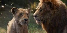 Disney's 2019 live-action remake of 'The Lion King' with Beyoncé, Donald Glover, Seth Rogen and John Oliver smashed records at the box office. Le Roi Lion 1, Le Roi Lion Film, Le Roi Lion Disney, Lion King Remake, The Lion King, Lion King Movie, Donald Glover, Disney Live, Walt Disney