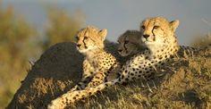 Maasai Mara ~ A place I MUST return to visit!