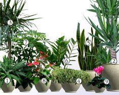 Kwiaty Na Parapet Rosliny Do Biura Ktore Przezyja W Trudnych Warunkach Plants Parapet