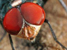 weird bugs | STRANGE INSECTS - CLOSE UP! - BIG BUG EYES