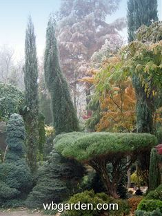 Jan Slama's dwarf conifer garden