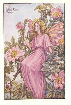 Flower Fairies - Cicely Mary Barker
