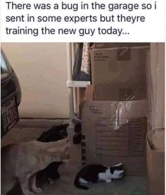20 Animal Memes That Are Funny - World's largest collection of cat memes and other animals Funny Animal Photos, Funny Animal Memes, Cute Funny Animals, Funny Cute, Cat Memes, Cute Cats, Funny Pictures, Funny Memes, Funny Pics