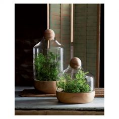 Copenhagen Terrariums by Sprout Home