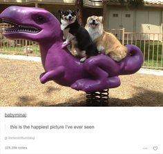 15+ Dog Posts On Tumblr That Are Impossible To Get Through Without Smiling