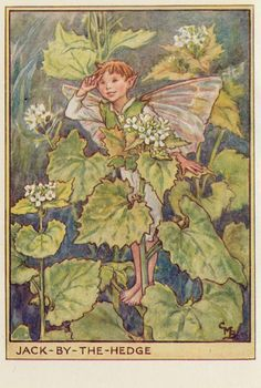 https://flic.kr/p/dXvYSN | Cicely M Barker Fairies of the wayside  ill 1  Jack by the Hedge  1948 | en.wikipedia.org/wiki/Cicely_Mary_Barker