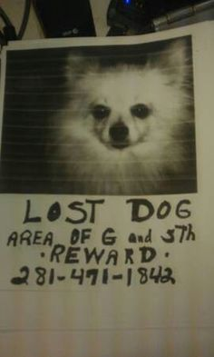 *** LOST FRIDAY EVENING 7/11/14 IN #LAPORTE #TX AT AVE. G & 5TH ST.  WHITE FACE. BLOND HAIR. REWARD IF FOUND. OWNER IS VERY ILL AND TRAUMATIZED.  PLEASE CALL 832-561-6890***  http://houston.craigslist.org/laf/4569197433.html lost dog, blond hair, white face, 5th st, lost pet