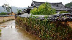 Korea traditional stone wall and autumn persimmon in namsa yedam chon, geongnam sancheong - Korea traditional stone wall and autumn persimmon in namsa yedam chon, geongnam sancheong 경남. 산청 남사예담촌. 울타리와 감나무. 한국에서 가장 아름다운 마을