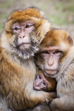 http://www.pinterest.com/ticklesmepink/animal-kingdom/  Family hugs