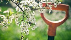 Έξυπνο Τρικ που θα Γεμίσει τη Βεράντα σας με Τριαντάφυλλαspirossoulis.com – the home issue Indoor Garden, Garden Plants, Blossom Garden, Hello Spring, Bird Feeders, Wreaths, Outdoor Decor, Flowers, Home Decor