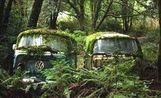 Volkswagen custom surfing Kombi van bay window wagon project, Camper for sale, Joss Stone's VW, Vdub. Volkswagen Bus, T3 Vw, Volkswagen Beetles, Vw Caravan, Vw Camper, Campers, Abandoned Cars, Abandoned Places, Abandoned Vehicles