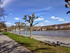 Wandern Through Wuerzburg
