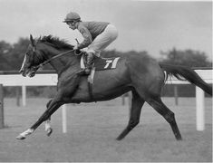 269 Best Thoroughbred History Images In 2016 Thoroughbred