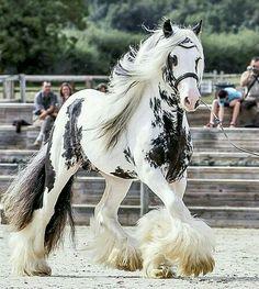 Hermoso caballo ^-^