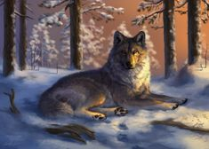 Flint by Wolnir on DeviantArt Wolf Pictures, Pictures To Draw, Wolf Mates, Mystical Pictures, Wolf Hybrid, House Of Wolves, Native American Wolf, Fantasy Wolf, Fantasy Art