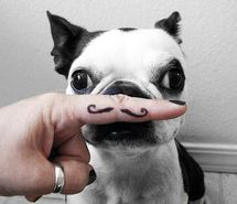 Are dogs cuter with mustaches?