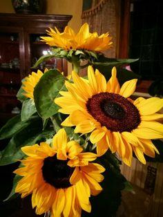 Sunflower Garden, Sunflower Art, Yellow Sunflower, Yellow Flowers, Sun Flowers, My Flower, Flower Power, Sunflowers And Daisies, Growing Sunflowers