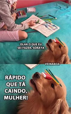 Mds ksksksksk que fofo Wtf Funny, Funny Cute, Funny Jokes, Ayyy Lmao, Funny Animals, Cute Animals, Pets 3, Memes Status, Best Memes