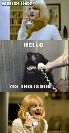 Hello.  Yes, this is Dog.