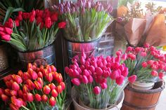 Fill your vases with tulips!
