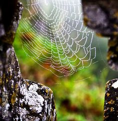 Hidden secrets of nature everywhere...