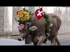 Alpabfahrt Klönstalden 2016 - YouTube Folklore, Horses, Youtube, Animals, Swiss Guard, Art, Animales, Animaux, Horse