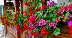 Container Gardening, Gardening Tips, Vegetable Gardening, Patio Plans, Flower Window, Unique Gardens, Garden Photos, Flower Boxes, Garden Landscaping
