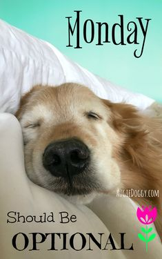 Monday Should be Optional! (Note: magnet sold without watermark :) ) by #AugieDoggyStore