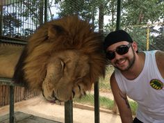 The lions sleep tonight The Lion Sleeps Tonight, Lions, Animals, Buenos Aires, Lion, Animales, Animaux, Animal, Animais