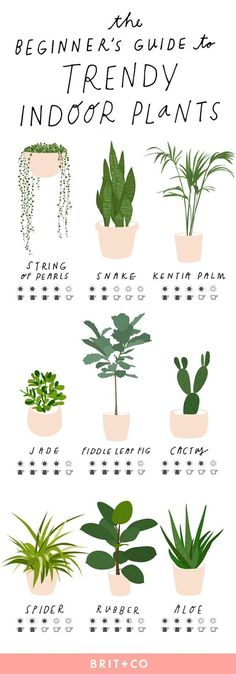 The Beginner s Guide to Trendy Indoor Plants via Brit Co