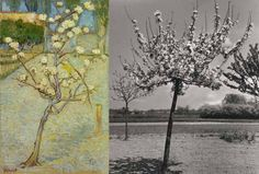 Today the exhibition 'The world of Van Gogh: Photographs by Emmy Andriesse from the print collection' opened.  More info: http://www.vangoghmuseum.nl/vgm/index.jsp?page=351123&lang=en  Image: (left) Vincent van Gogh (1853-1890), Small Pear Tree in Blossom, 1888, Van Gogh Museum, Amsterdam (right) Emmy Andriesse (1914-1953), Little flowering trees, Arles, Van Gogh Museum, Amsterdam. Copyright- Leiden University Library-Joost Elffers.