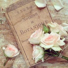 Book and roses - bbs 16