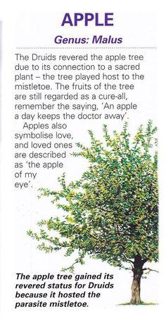 Tree Lore - Apple