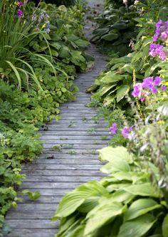 Mökkipihassa on kiva kulkea mutkittelevia, jännittäviä polkuja pitkin. Luonnollinen kulkureitti näyttää pihapolun paikan. Katso Meidän Mökin kauniit ideat ja suunnittele oman mökkisi pihapolku. Dream Garden, Garden Paths, Outdoor Gardens, Herbs, Plants, Garden Ideas, Outdoors, Gardening, Gardens