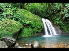 Waterfall in the tropical forest, Martinique Island Pointe À Pitre, French West Indies, Tropical Forest, Bed And Breakfast, Caribbean, Destinations, Around The Worlds, Vacation, Instagram Posts