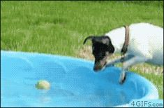 - LOL-worthy gifs of funny animals doing funny things Funny Dog Memes, 9gag Funny, Funny Cartoons, Funny Dogs, Hilarious Stuff, Funny Fails, Gifs, Baby Animals, Funny Animals