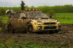 Squinting Scoobie Getting Dirty.