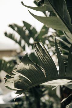 Surfrider Malibu — M. Plant Aesthetic, Nature Aesthetic, Beige Aesthetic, Aesthetic Photo, Aesthetic Pictures, Aesthetic Backgrounds, Aesthetic Iphone Wallpaper, Aesthetic Wallpapers, Phone Backgrounds